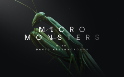 Alchemy Immersive and Oculus Brings us David Attenborough's Micro Monsters in Virtual Reality