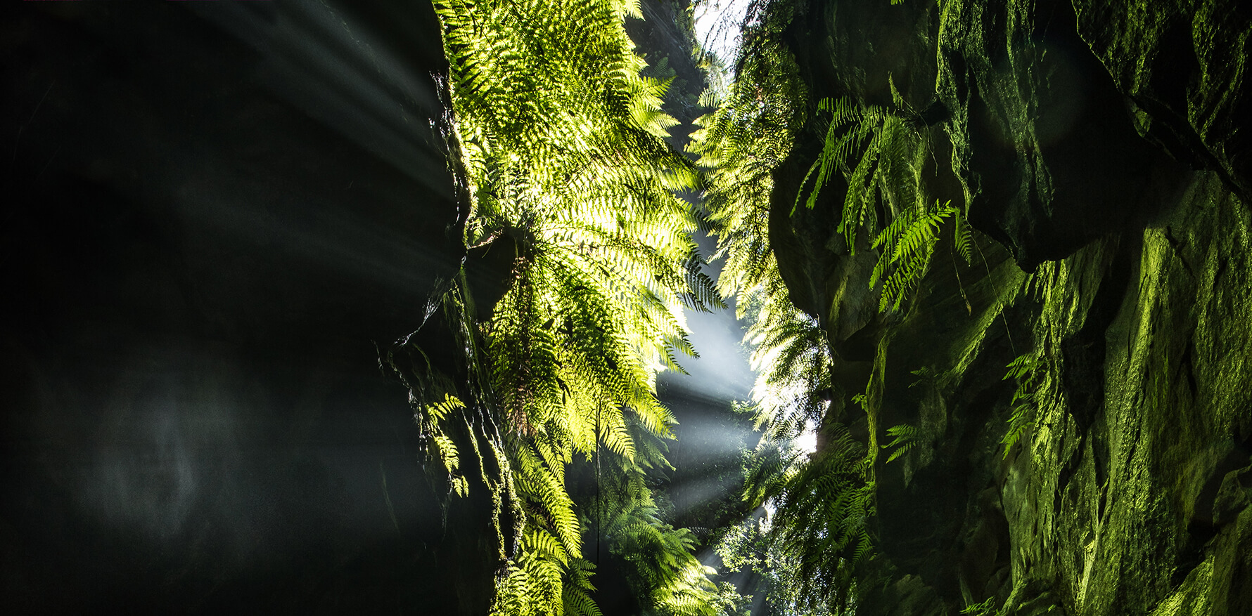 Ferns in Claustral Canyon photographed by Michael Breer will be turned to Virtual Reality experience