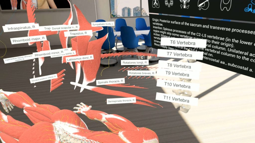 Human anatomy taken apart in 3D as a tool for a medical education
